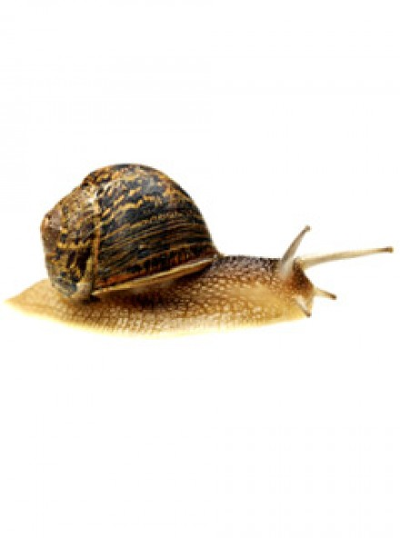 Snails: new sell-out food sensation