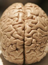 Marie Claire News: Brain
