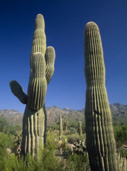 Latest detox craze Cactus juice