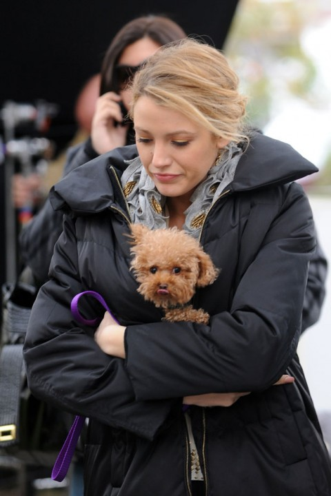 The cutest celebrity pets 2012