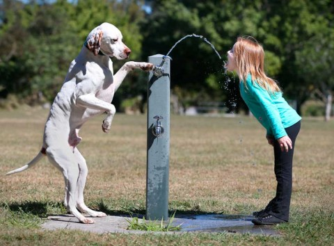 Jack the English pointer 'paws' young Lauren Rowe a drink on the first day of spring