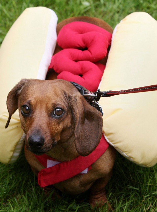Sausage-dog-costume