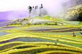 Rice Blog