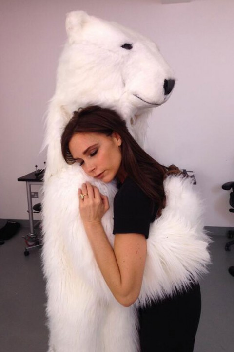 Victoria Beckham cuddles up to a polar bear