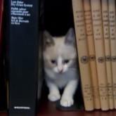 Kitten books thumbnail