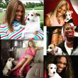 Serena Williams Jackie Dog