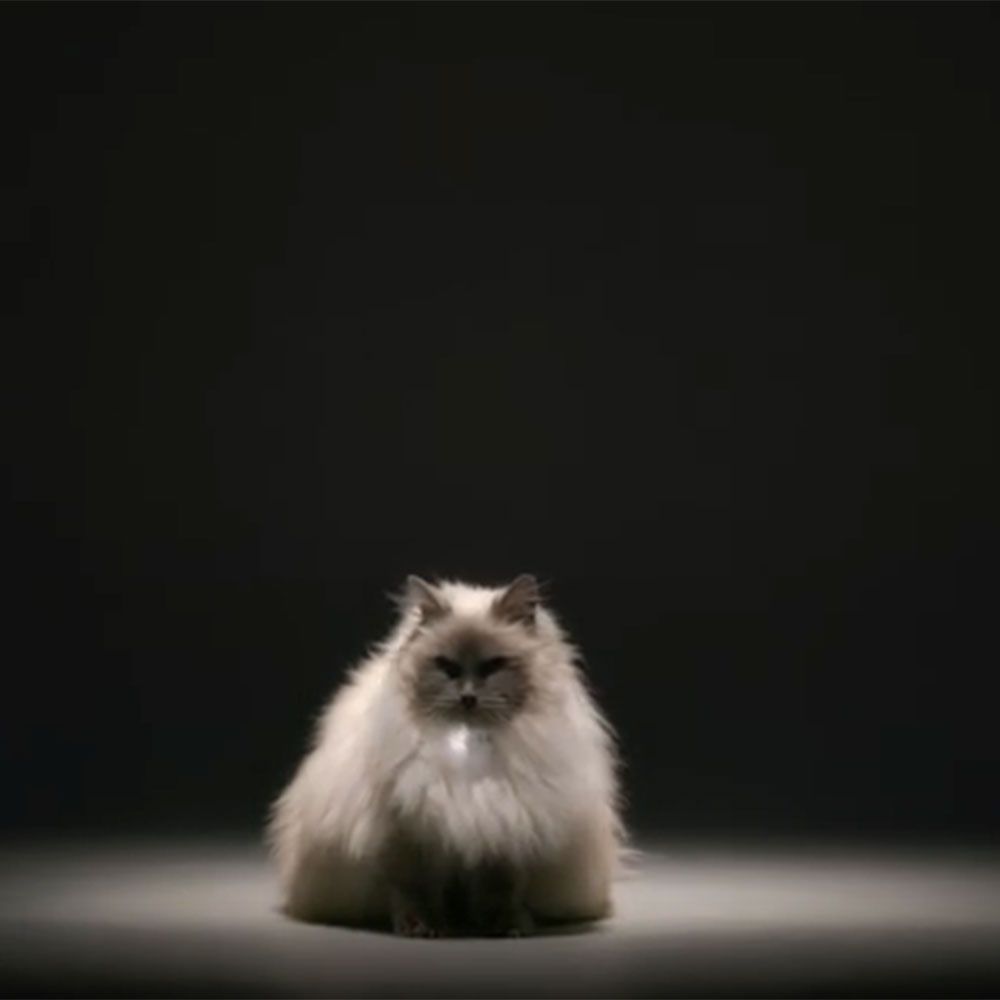 crazy cat lady gif