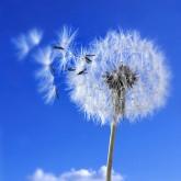 Best-hay-fever-remedies-thumbnail.jpg