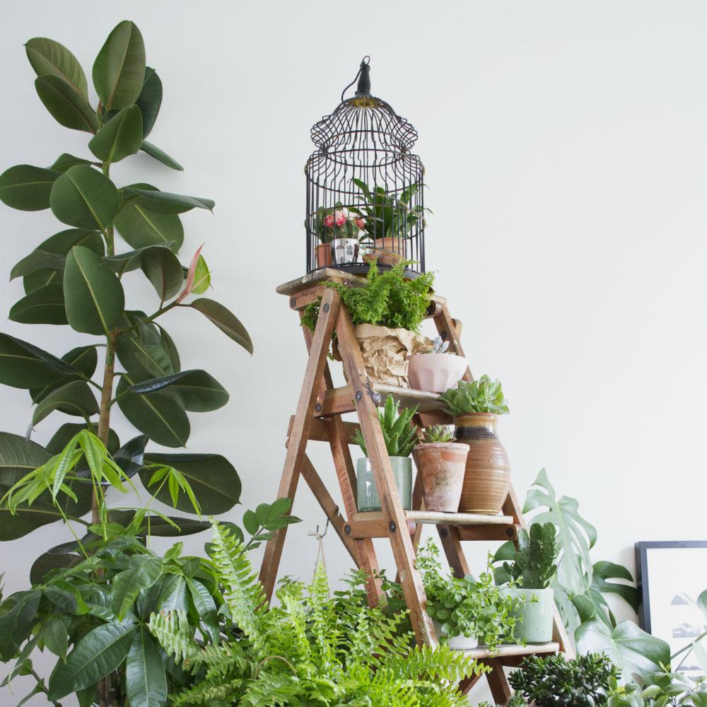 Indoor plants create your own indoor garden marie claire for Make your own indoor garden